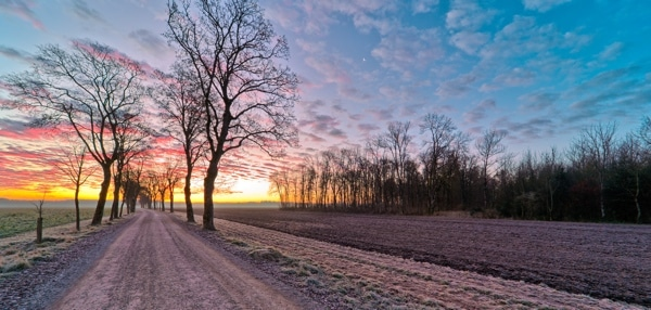 Dirt Road with Maple Trees in Winter Sunrise