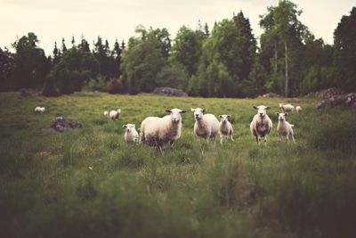 shepherding-your-worship-team