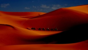 camel caravan with tourists riding along sand dunes at sunrise